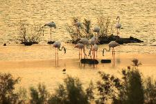 """Flamingoes"" - Dubai 2006"